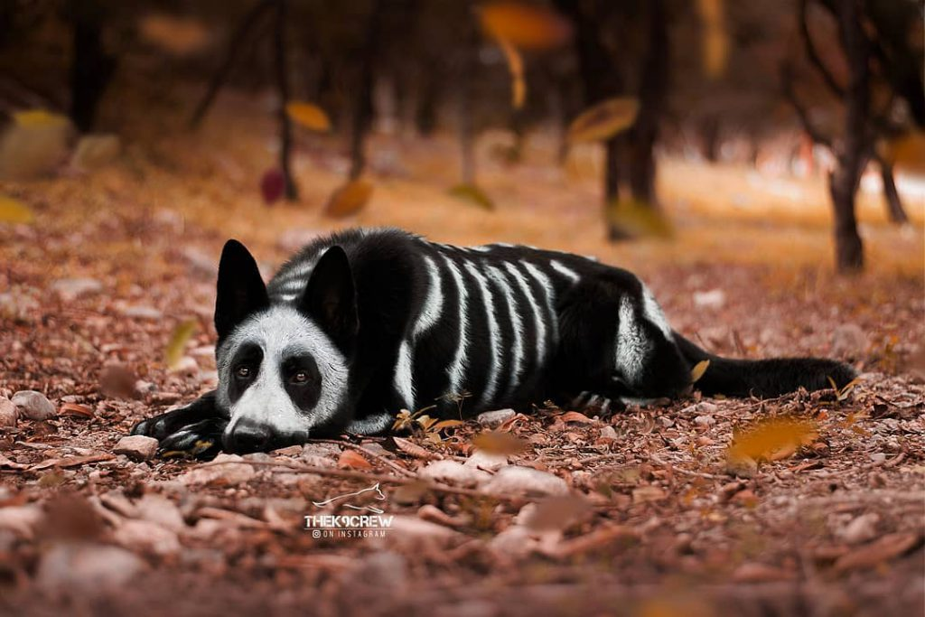 Skeleton - Halloween Costume For Your Dog