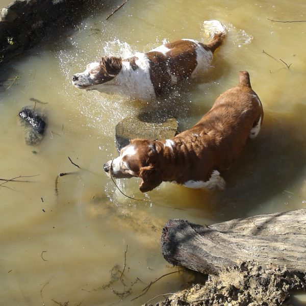 Dogs getting wet by Andrew James