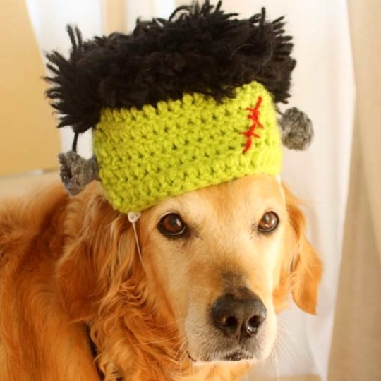 Frankendoggy - Halloween Costume For Your Dog