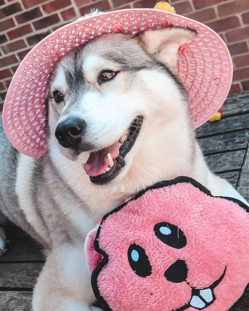 Dog wearing a pink hat holding a pink toy
