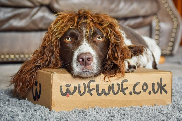 Dog with funny hair on a WufWuf box