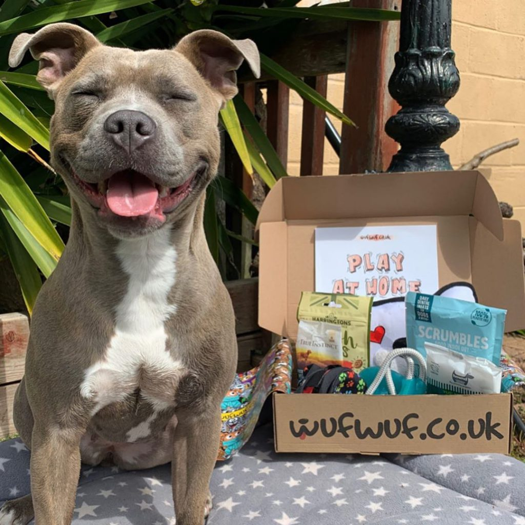 Dog in front of a WufWuf box smiling