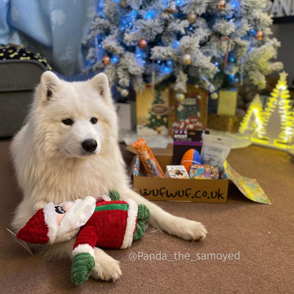 Dog with a christmas themed santa toy posing in front of a WufWuf box