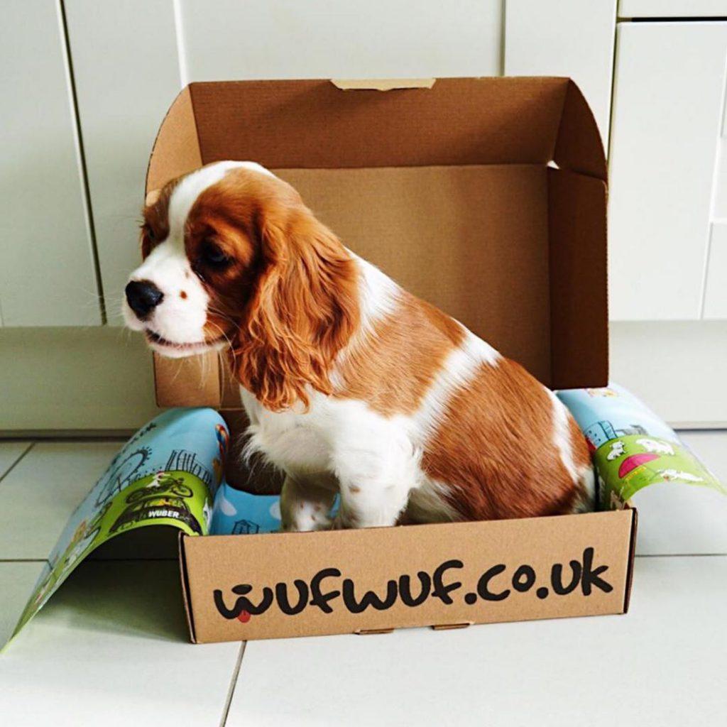 Dog sitting inside a WufWuf box