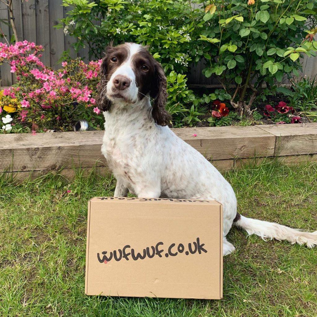 Dog posing with a WufWuf box