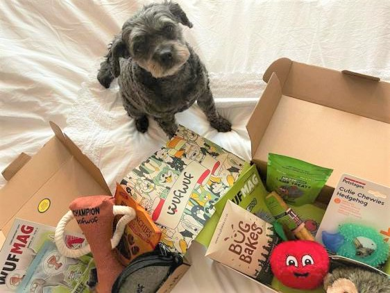 Rescue dog cookie from Cookie's Rescue posing with WufWuf Boxes.