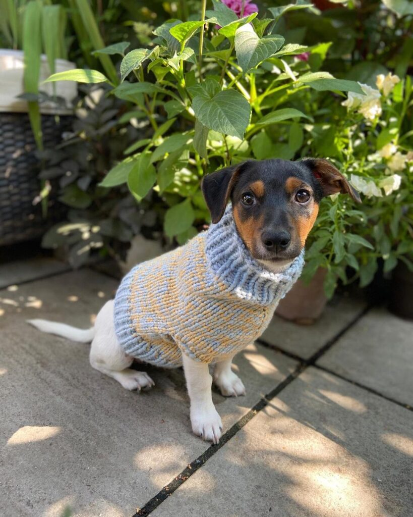 Small dog in homemade sweater - Tom Daley