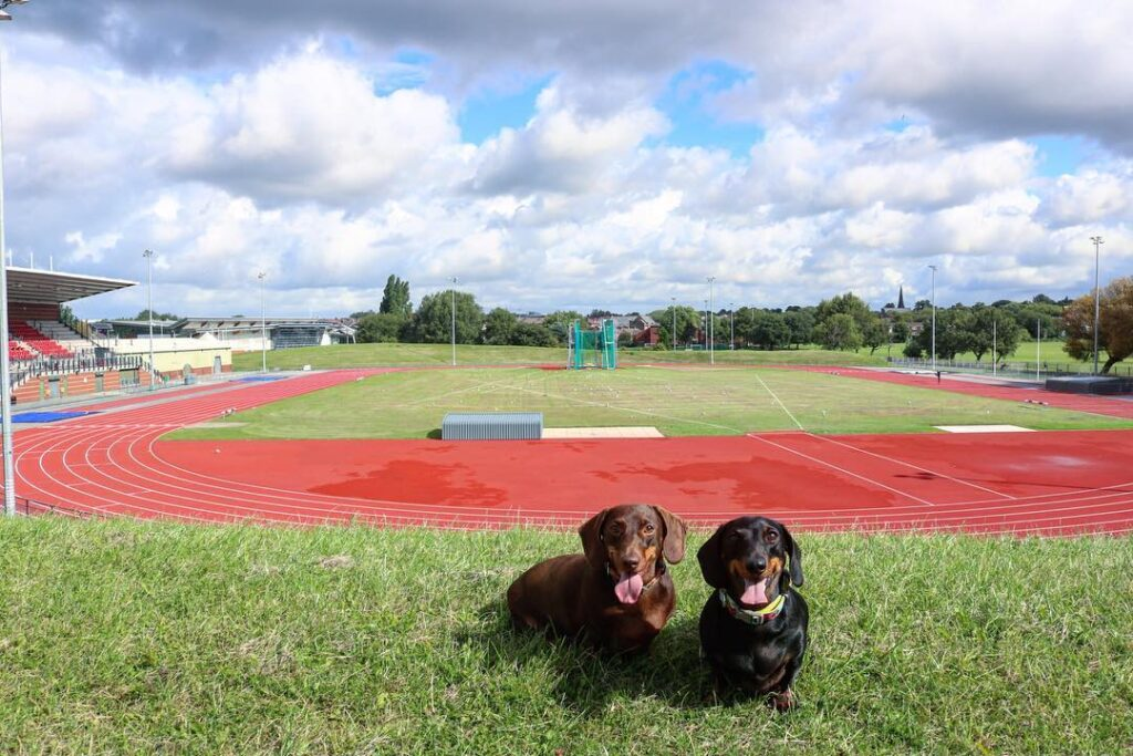 2 Dachshunds with racing track in background