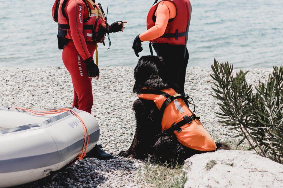 Lifeguard dog on Beach in Italy