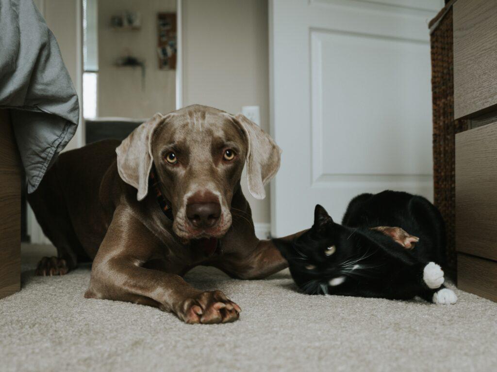 Dog and cat lying on carpet