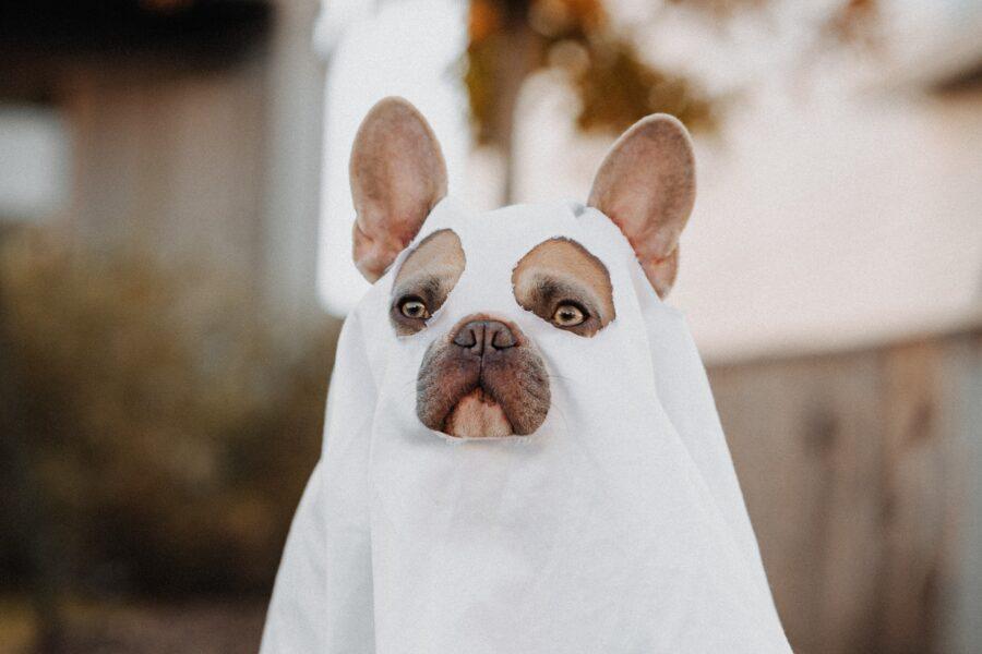 Dog in sheet - Halloween costume